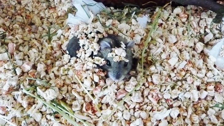 Hamster_HamsterHouse_Hamsterkaefig_006